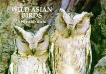 WILD ASIAN BIRDS POSTCARD BOOK
